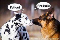 Fire dog meets police dog.