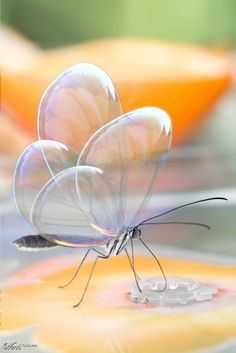 Translucent butterfly ... the wings look like glass bubbles ... amazing digital creation