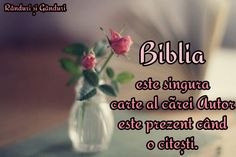 Glass Vase, Bible, Author