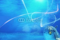 Stock photo available for sale at Fotolia: Underwater Background With Dolphin