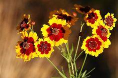 sun flower garden ideas 15 Full-Sun Perennials for Your Garden Design a Garden You Love Summer Plants, Fall Plants, Sun Plants, Full Sun Flowers, Summer Flowers, Full Sun Perennials, Sun Loving Plants, Landscaping With Rocks, Driveway Landscaping