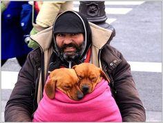 Homeless , dogs, animal friends , street