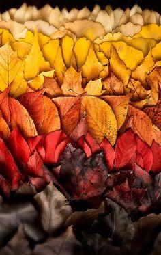 Camaieu de feuilles