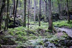 Der verwunschene Wald unter der Watzmann-Ostwand. http://ausgelatschte-schuhe.de/watzmann-eiskapelle/
