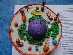 A taki oto model komórki zrobiła jedna z uczennic - Madzia Kałuża z klasy IVa, przyznajcie, że robi niesamowite wrażenie;) Nie mogłam się oprzeć, żeby nie umieścić zdjęć na naszym blogu. Jeśli ktoś ma czas i ochotę niech napisze jaka struktura jest oznaczona nr 3 i jaką pełni funkcję w komórce. Prawidłowe odpowiedzi zostaną nagrodzone;)) Cake, Desserts, Food, Science, Tailgate Desserts, Deserts, Kuchen, Essen, Postres