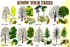 science, botany, nature journal, trees - for (home)school Trees And Shrubs, Trees To Plant, Horticulture, Leaf Identification, Forest School, Camping Survival, Emergency Preparedness, Survival Prepping, Tree Leaves