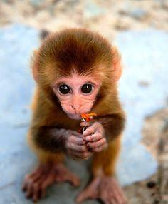 Baby Monkey, vou levar pra mamãe!!!