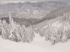 Snowboard la Straja Snowboard, Outdoor, Outdoors, Outdoor Games, The Great Outdoors
