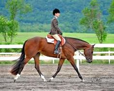 Beautiful, classic bay hunter under saddle horse. Horses And Dogs, Show Horses, American Quarter Horse, Quarter Horses, Hunter Under Saddle, Hunt Seat, Whatever Forever, Horse Show Clothes, Bay Horse