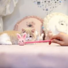 New cats cute families Ideas Kittens And Puppies, Cute Cats And Kittens, I Love Cats, Crazy Cats, Kittens Cutest, Cute Puppies, Cute Funny Animals, Cute Baby Animals, Animals And Pets