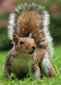 Project Squirrel by MTB1975 on Flickr