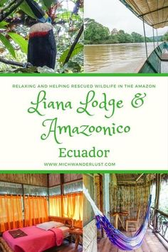 A great way to explore the Amazon: Liana Lodge and the animal rescue centre Amazoonico are wonderful examples of sustainable and responsible tourism | Rainforest | Ecuador | Amazon | MichWanderlust