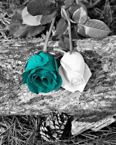 Black White Teal Rose Flowers/Nature Creative by LittlePiePhotoArt
