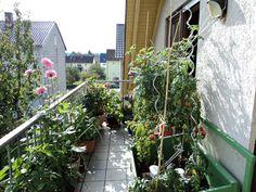 membuat kebun sayur di lahan sempit desain rumah