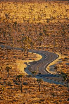 Mojave, California-reminds me of summers with relatives riding in the sand rail. What fun!