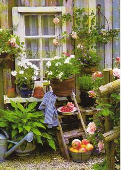 Potted garden
