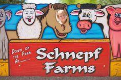 Eat a Peach: Annual Peach Festival at Schnepf Farms - Phoenix New Times