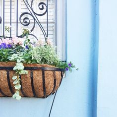 A Bit of Charleston South Carolina, Charleston, Traveling By Yourself, Planter Pots, Plant Pots