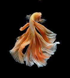peskynymph:  Title: orange dress Artist: bluehand (...