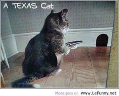 A Texas Cat...Too Funny!