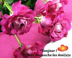 Bonjour ! Bon dimanche les Ami(e)s #bondimanche fleurs roses bon dimanche