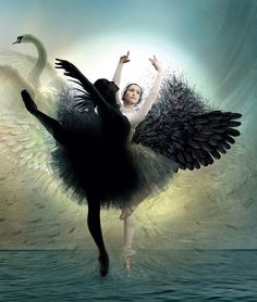 Swan Lake (Russian: Лебединое озеро) is a ballet composed by Pyotr Ilyich Tchaikovsky in Art Ballet, Ballet Dancers, Ballerinas, White Swan, Black Swan, Black White, White Art, Dance Photos, Dance Pictures