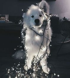 Somebody found the fairy lights...