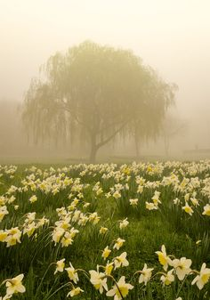 Misty March morning in Rotherham, Yorkshire,England