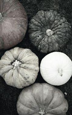 Grey scale pumpkins