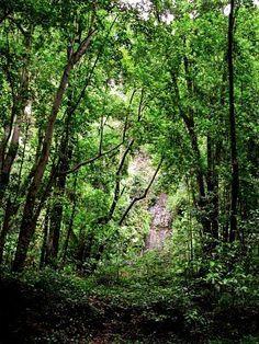 The Wild North - La Palma