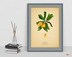 Items similar to Hawthorn Botanical decor digital art print vintage picture antique poster home old image wall print cubicle decor drawing watercolor art on Etsy Old Images, Botanical Wall Art, Cubicle, Vintage Pictures, Wall Prints, Watercolor Art, Digital Art, Antiques, Drawings