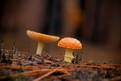 Winter Mushrooms (HDR) - Pho·to·gra·phy