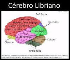 Resultado de imagem para o cérebro dos signos