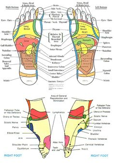 Hand and Foot Reflexology Chart. 25 Hand and Foot Reflexology Chart. top Of Foot Reflex Chart Vatan Vtngcf Massage Corps, Foot Chart, Health And Wellness, Health Fitness, Mental Health, Reflexology Massage, Foot Reflexology Chart, Lymph Massage, Reflexology Points