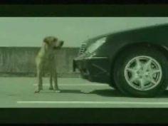 A Dog's Suicide Attempt (Bridgestone Commercial) - YouTube