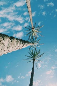 Find images and videos about summer, blue and nature on we heart it - the app to get lost in what you love. Summer Vibes, Summer Feeling, Summer Breeze, Oahu, Palmiers, Summer Of Love, Monuments, Land Scape, Strand
