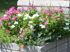 First year in the mailbox planter. Mailbox Planter, Periwinkle, Planters, Gardening, Blue, Lawn And Garden, Plants, Pot Holders, Horticulture