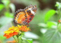 reiman gardens » amanda.matilda.photography