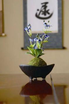 Unique Kokedama Ball Ideas for Hanging Garden Plants - Home Decor Ideas Bonsai Art, Bonsai Garden, Garden Terrarium, Ikebana, Japanese Plants, Japanese Flowers, Art Floral Japonais, Mini Bonsai, Little Gardens