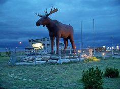 Giant fibreglass moose near information centre in Moose Jaw, Saskatchewan, Canada
