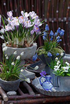 Homing Scrap: Tavaszváró