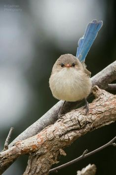 Types Of Cute And Small Birds - What is the smallest bird in the world? Cute and small birds are one of the most interesting creatures on Earth. Cute Birds, Pretty Birds, Small Birds, Colorful Birds, Little Birds, Beautiful Birds, Animals Beautiful, Animals And Pets, Cute Animals