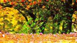Japanese Cherry Blossom Tree ARTCOLORED 14 実写映像素材 www.motionelements.com/ja/stock-video-footage/444406/japanese-cherry-blossom-tree-artcolored-14.html?ref=41NTPJR Cherry Blossom Tree, Video Footage, Live Action, Stock Video, Japanese Blossom, Digital Art, Outdoor, Design, Outdoors