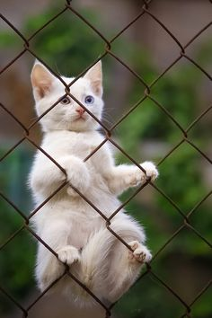 """"""" // cat stuck on a fence // kitten // cute cats // kitten pictures Cute Cats And Kittens, I Love Cats, Crazy Cats, Cool Cats, Kittens Cutest, Ragdoll Kittens, Tabby Cats, Funny Kittens, Bengal Cats"""