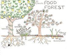 forest garden design - Google Search