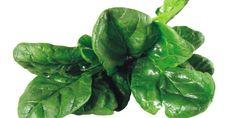 Spinat, Kalorien und Nährwerte - Aromatisch, vielfältig und gesund > Kalorien-Ratgeber