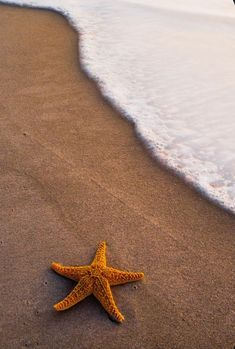 Black and white (Biro) with coloured star fish (bright orange) Strand Wallpaper, Ocean Wallpaper, Summer Wallpaper, Iphone Background Wallpaper, Aesthetic Iphone Wallpaper, Disney Wallpaper, Aesthetic Wallpapers, Beyond The Sea, Beach Background