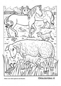 Coloring for adults - Kleuren voor volwassenen Farm Animal Coloring Pages, Free Adult Coloring Pages, Printable Coloring Pages, Colouring Pages, Coloring Sheets, Coloring Books, Doodle Drawings, Animal Drawings, Line Illustration