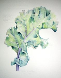 Sea Kale, watercolor painting by Jessica Rosemary Sheperd ~ Google Image Result for http://3.bp.blogspot.com/