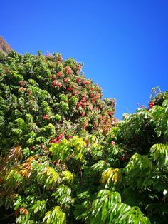 Canario, Maspalomas, Tree Structure, Photo Illustration